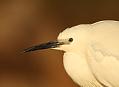 Camargue, ráj vodních ptáků