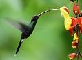 Orchidejová zahrada plná kolibříků, souboj v dešti
