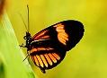 Motýli, nežná krása z Ekvádoru