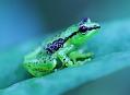 Madagaskar, ztracený svět obojživelníků a ještěrů