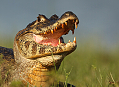 Jak se fotografuje v tropickém Pantanalu