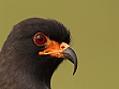 Příběhy dravců tropického Pantanalu