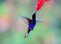 Mindo, zahrady plné kolibříků