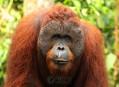 Indonésie, země draků a orangutanů