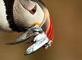 Papuchalk bělobradý, tak nějak divný rok