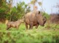 Uganda, ráj bílých nosorožců