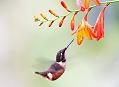 Tandayapa Valley, vzhůru do Mekky kolibříků