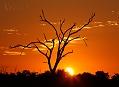 Gepard, nejrychlejší vládce Okawanga