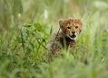 Okawango, zelené srdce Afriky