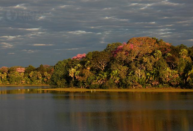 krajina_Pantanal_01