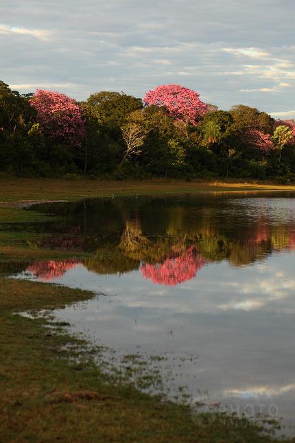 krajina_Pantanal_02