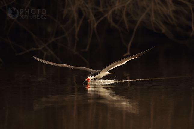 laguna_pantanal_07