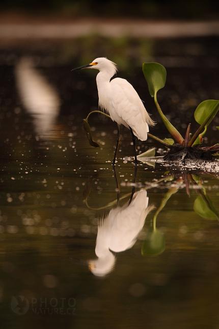 laguna_pantanal_14