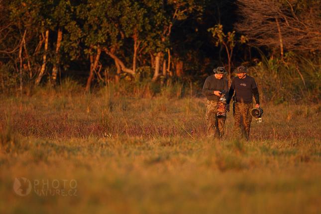 pantanal_anteater_09