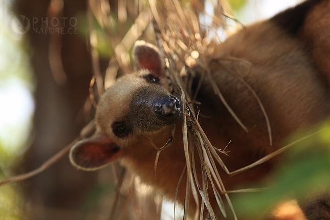 pantanal_anteater_11