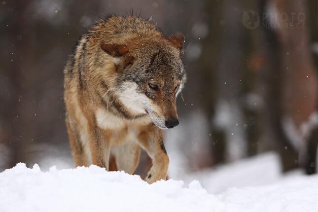 vlk04