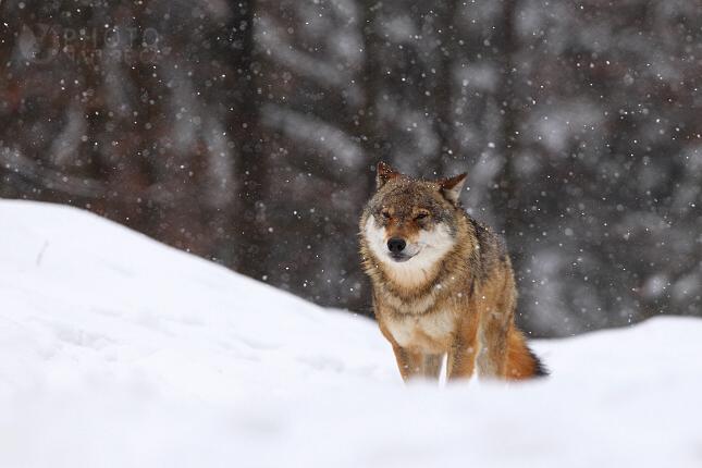 vlk05