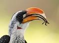 Velká Africká jezera, skutečný ptačí ráj