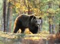 Medvědi a dravci v Českém ráji, slunný víkend