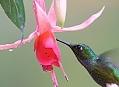 Ekvádor, ideální technika na kolibříky