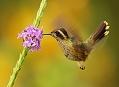 Ekvádor, strasti a slasti cestování za kolibříky