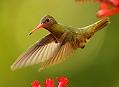 Ekvádor, tři týdny v ráji kolibříků