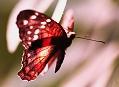Jonsdorf, motýlí dům