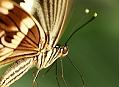 Canon EOS 5D Mark III, motýlí orgie