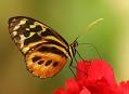 Jonsdorf, návštěva motýlího domu