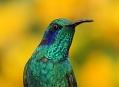 Fotosafari Ekvádor 2011, fotografování kolibříků
