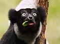 Madagaskar, zelený ostrov lemurů a chameleonů