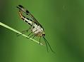 Vzpomínka na léto, fotografování rostlin a hmyzu