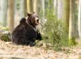 Medvěd hnědý, aneb šplhali jsme a schovávali se