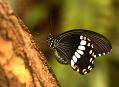 Tropičtí motýli opět v Praze