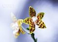 Fatamorgana, výstava orchidejí 2012
