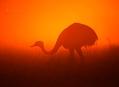Pantanal, nekonečné pláně divoké pampy