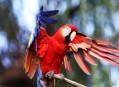 Ptačí svět na ostrově Borneo a Bali