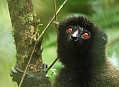 Ranomafana, nejkrásnější park Madagaskaru