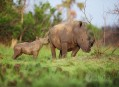 Uganda, zelená perla Afriky