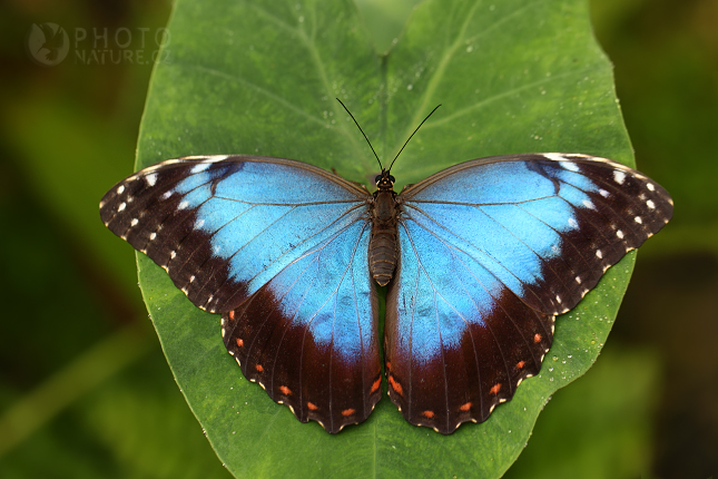Tropičtí motýli, něžná a pomíjivá Fatamorgana | Příroda ...