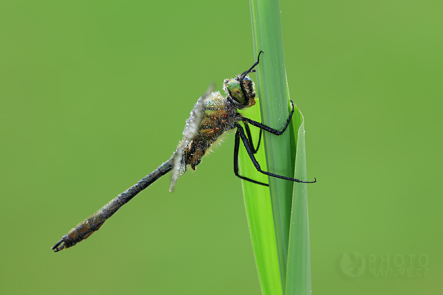 Makro, ze života hmyzu