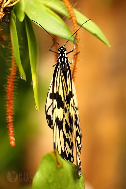 Tropičtí motýli Praha