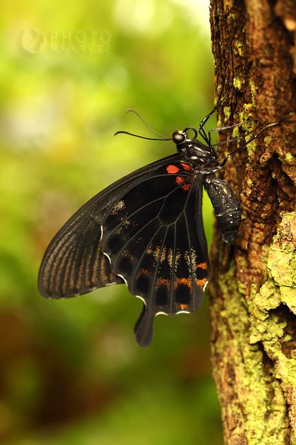 Tropičtí motýli, výstava Praha