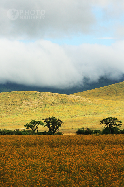 Krajina v kráteru Ngorongoro