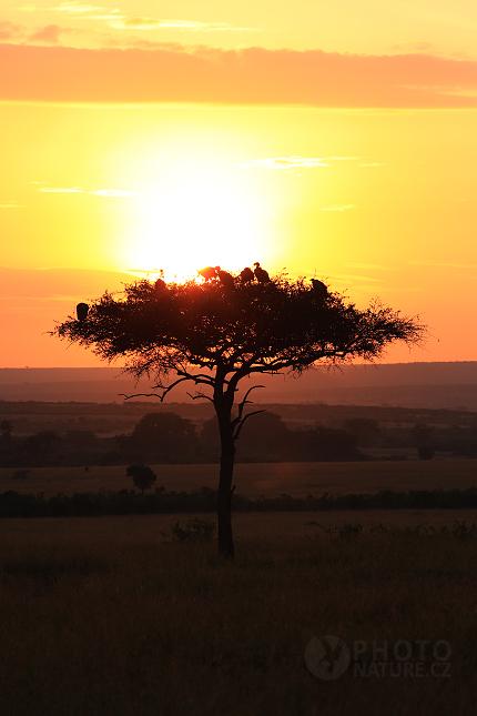 Africká krajina, Masai Mara