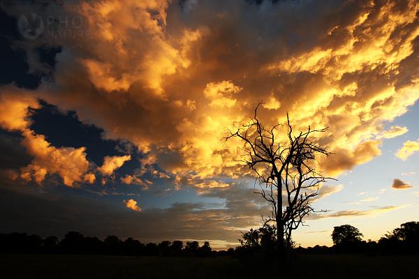 Západ slunce v Africe, Botswana
