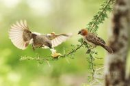 Ptáci