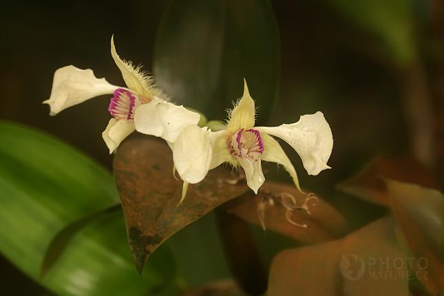 Výstava orchidejí Praha