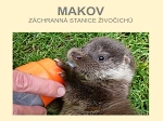 MAKOV.CZ - Libor Šejna